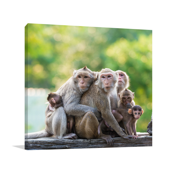 Monkey Family Photo Art