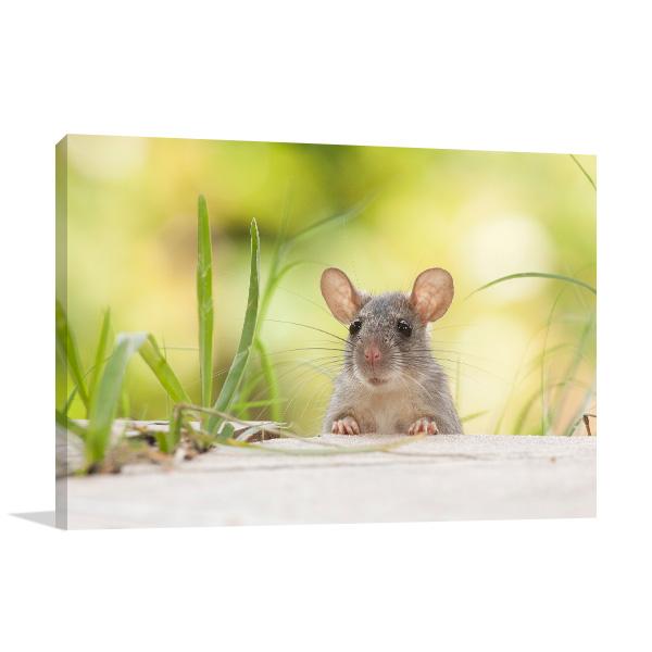 Mouse Peeking Print Photo
