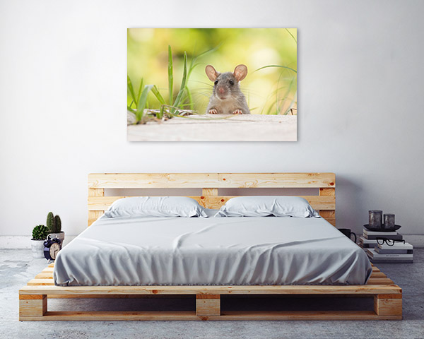 Mouse Peeking Picture Canvas
