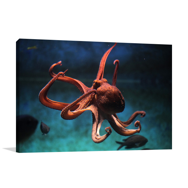 Octopus Wall Art Photo Print