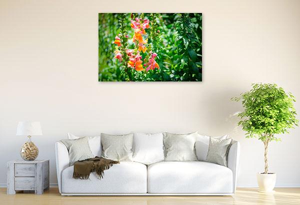 Orange and Pink Snapdragons Photo Art
