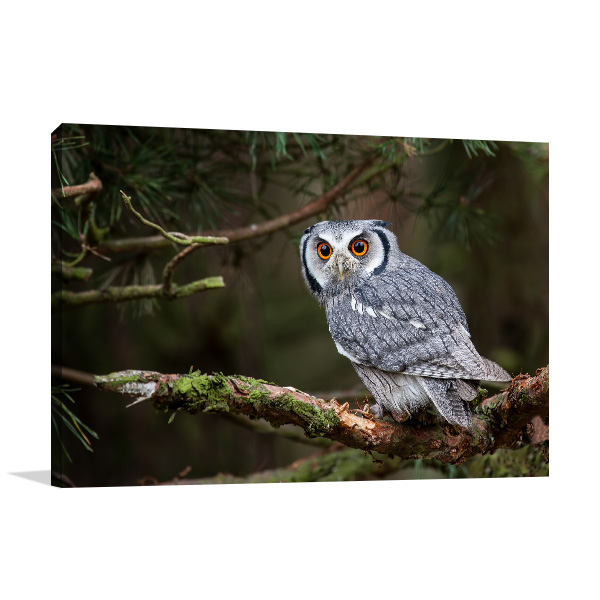 Owl in Tree Branch Photo Wall Arts