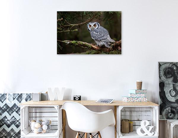 Owl in Tree Branch Artwork