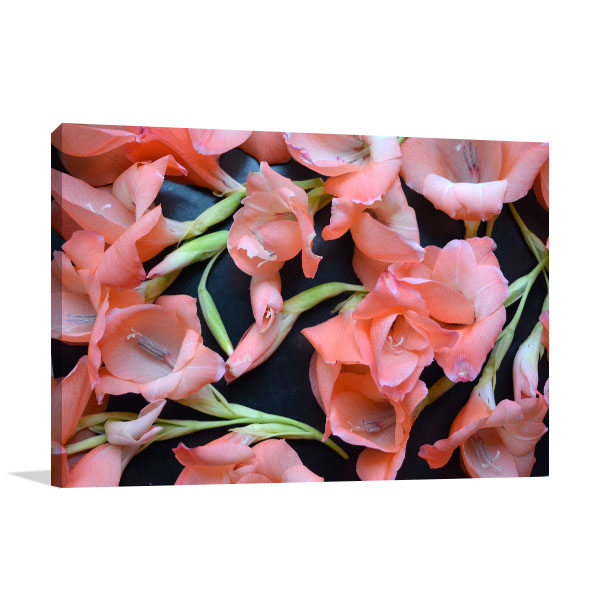 Peach Gladiolus Picture Wall