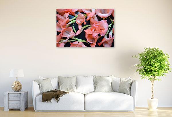 Peach Gladiolus Canvas Prints