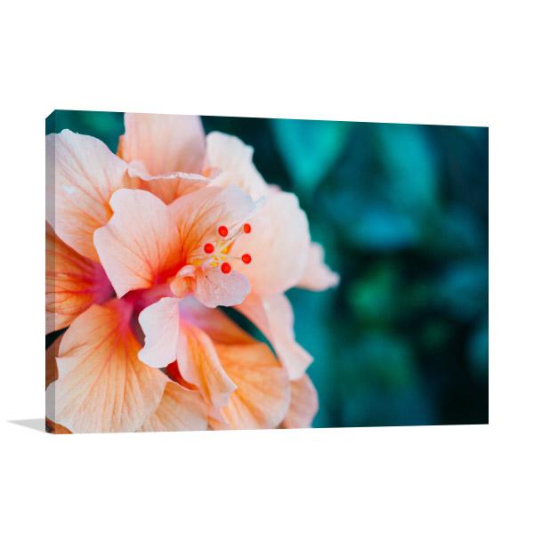 Peach Hibiscus Artwork Picture