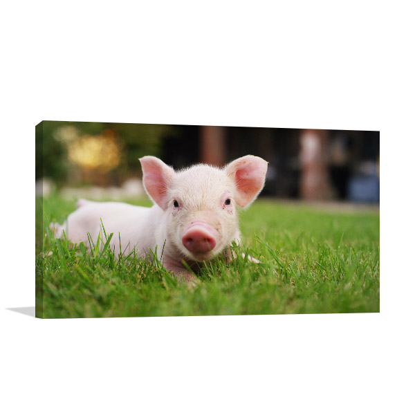 Pig in Grass Photo Wall