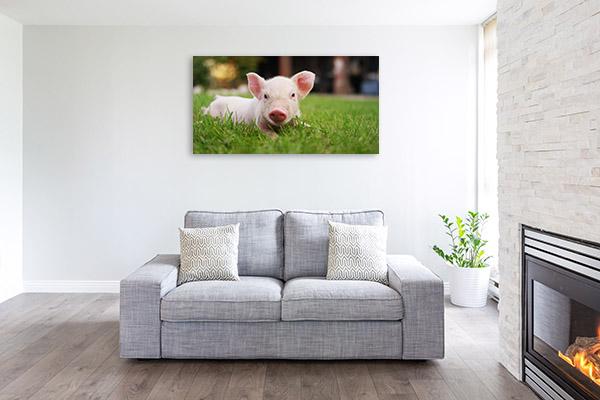 Pig in Grass Wall Art