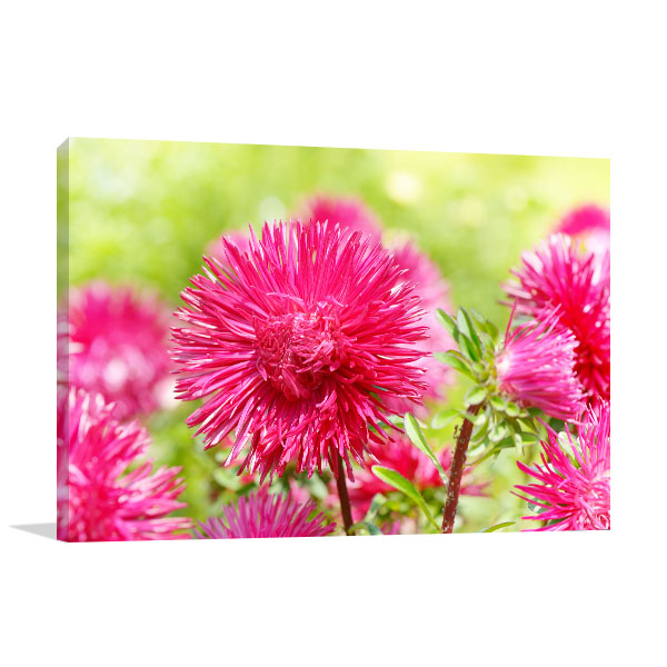 Pink Aster Wall Artwork