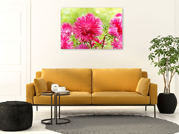Pink Aster Artwork Picture