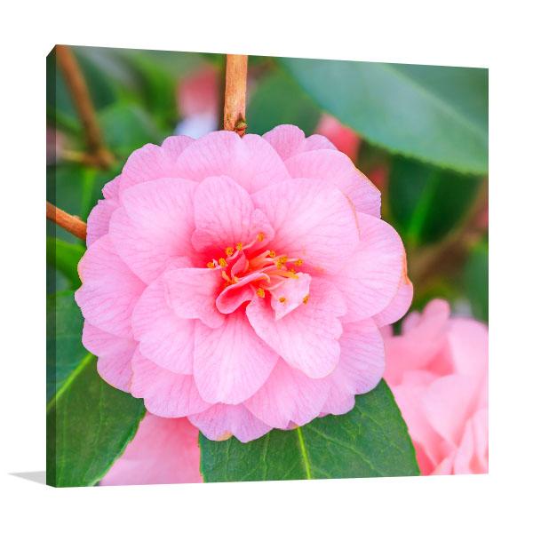 Pink Camellia Photo Artwork