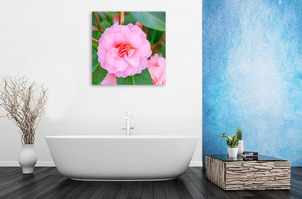 Pink Camellia Wall Picture