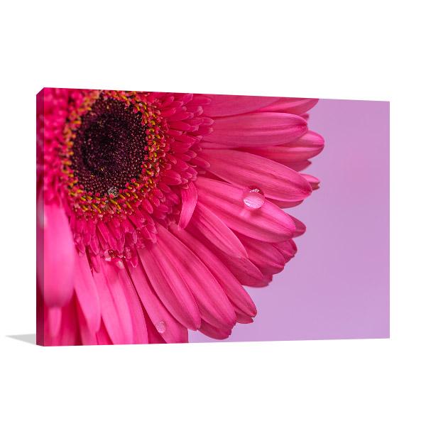 Pink Daisy Closeup Photo Print