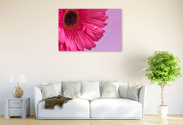 Pink Daisy Closeup Artwork Canvas