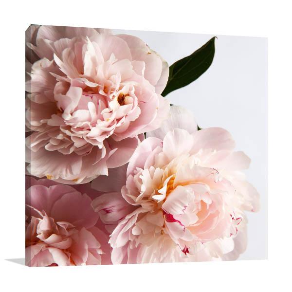 Pink Peonies Art Picture Design