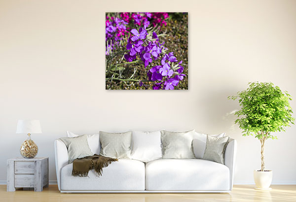 Purple Matthiola Photo Artwork