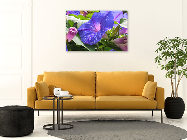Raindrops on Morning Glory Canvas Art Prints