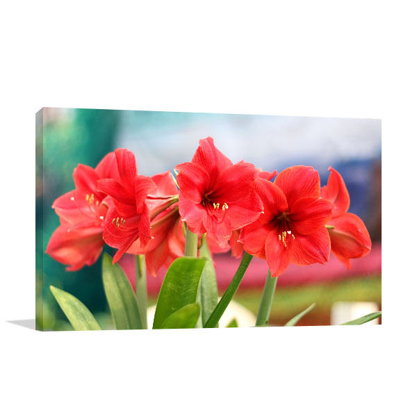 Red Amaryllis Wall Artwork