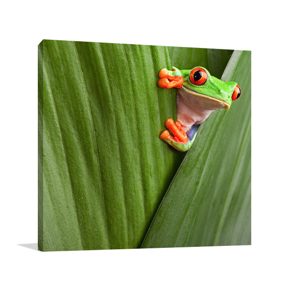 Red Eye Tree Frog Peeking Artwork Canvas