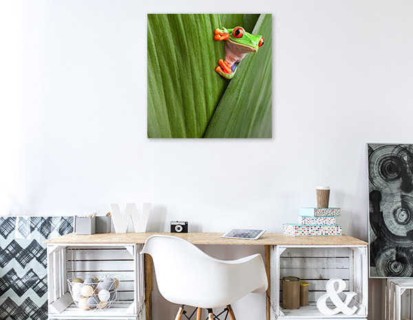 Red Eye Tree Frog Peeking Photo Print