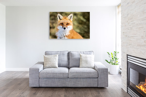 Red Fox Print Picture