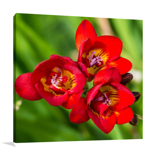 Red Freesia Picture Wall