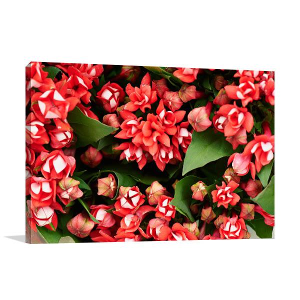 Red Longiflora Canvas Photo