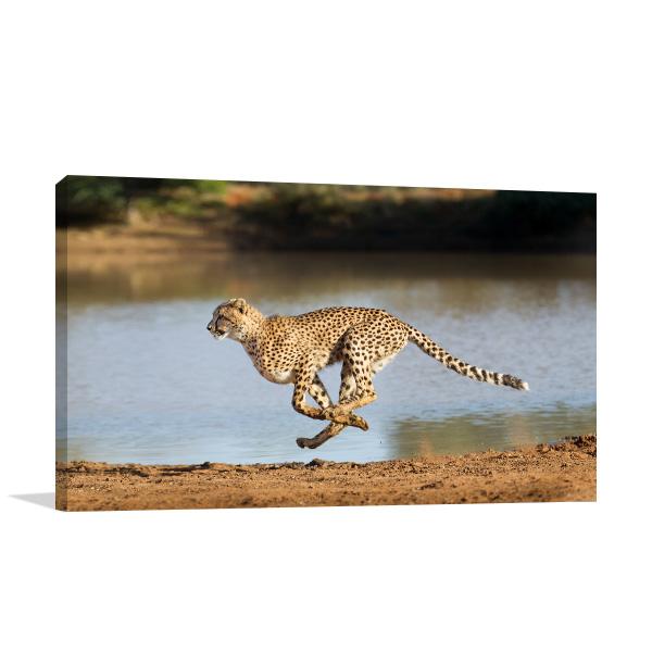 Running Cheetah Print Wall Art