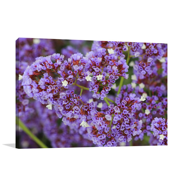 Sea Lavender Photo Wall