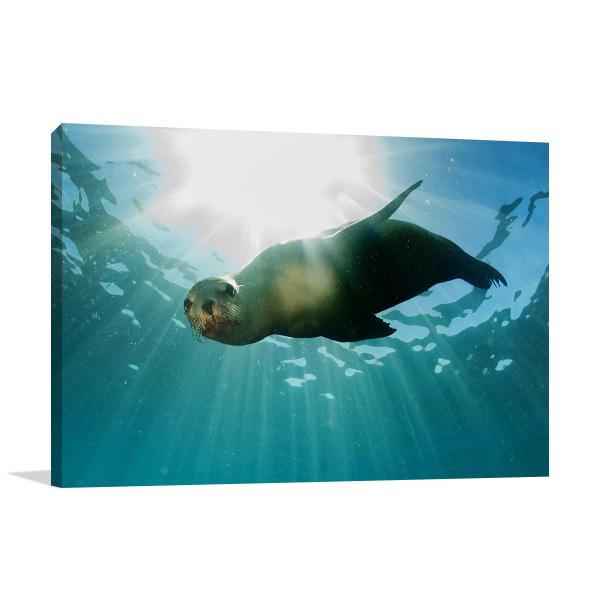 Sea Lion Print Art Canvas