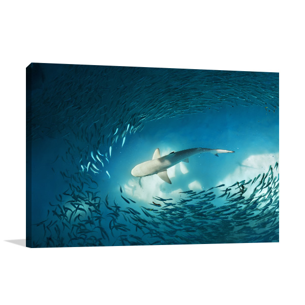 Shark and Fishes Artwork Picture
