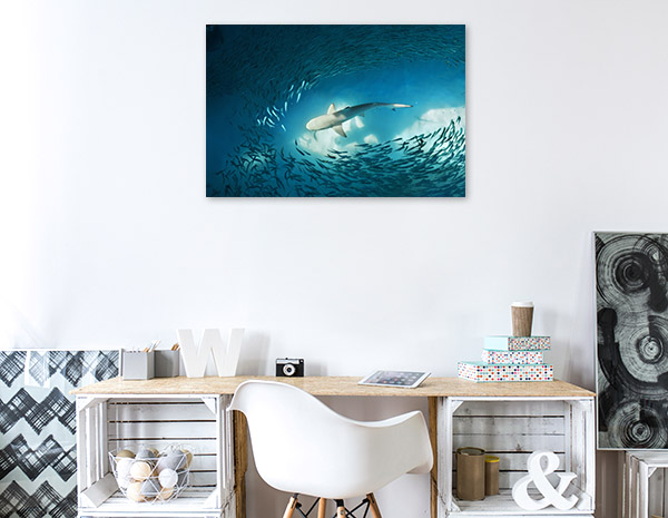 Shark and Fishes Artwork Wall