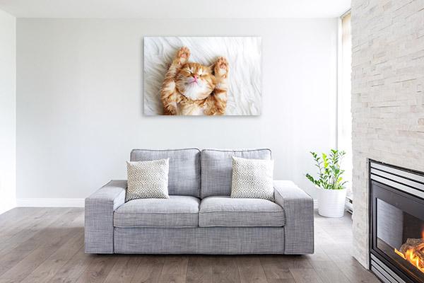 Sleepy Cat Picture Art