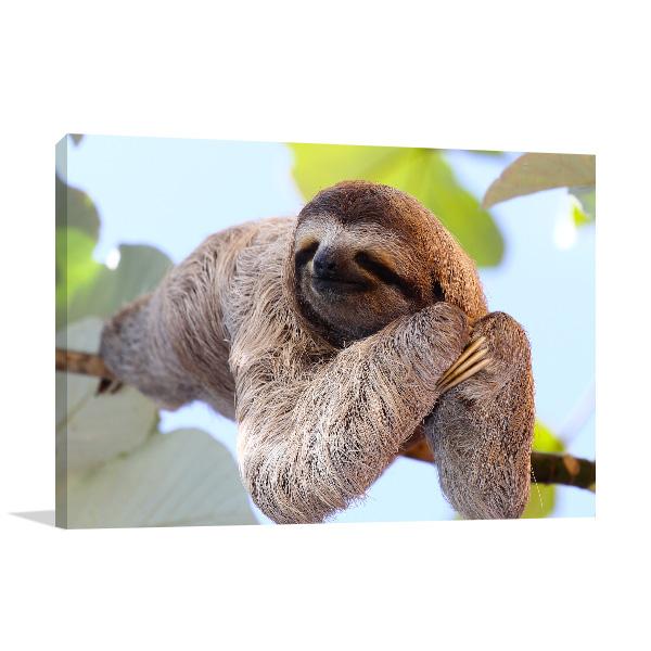 Smiling Sloth Art Photo