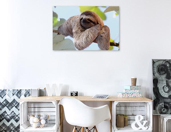 Smiling Sloth Artwork Canvas
