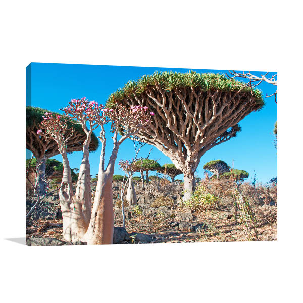 Socotra Island Picture Wall