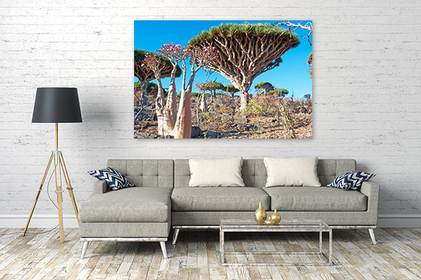 Socotra Island Wall Artwork