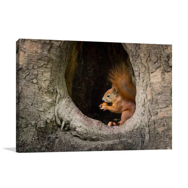 Squirrel in Tree Hole Picture Print