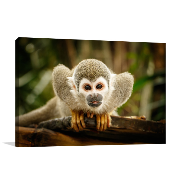 Squirrel Monkey Photo Wall Arts