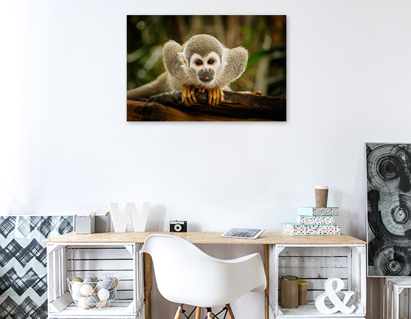 Squirrel Monkey Print Artwork
