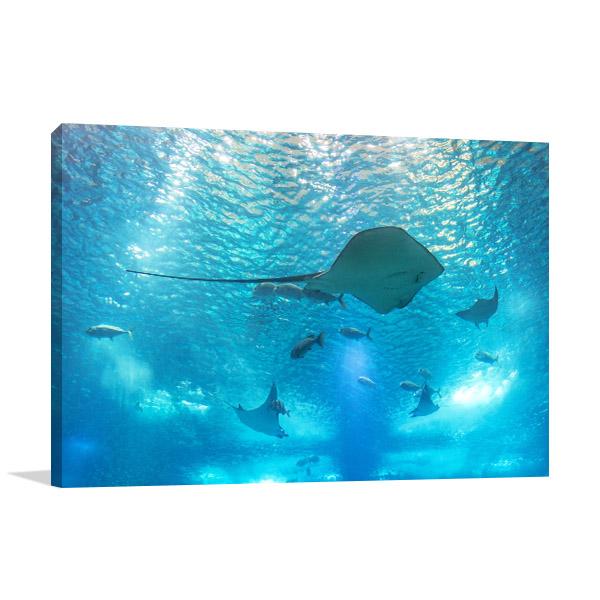 Stingray Marine Life Prints Canvas
