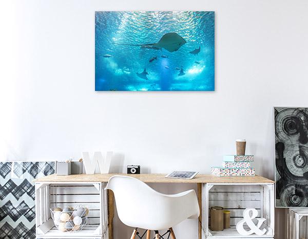 Stingray Marine Life Photo Wall