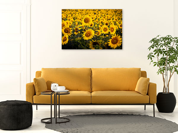 Sunflower Field Art Picture