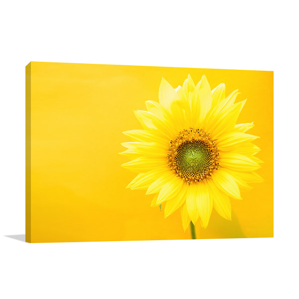 Sunflower on Yellow Background Picture Art