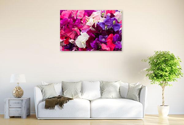 Sweet Pea Flowers Photo Wall