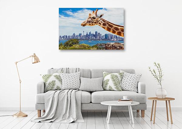 Taronga Zoo Art Print Sydney Picture Canvas