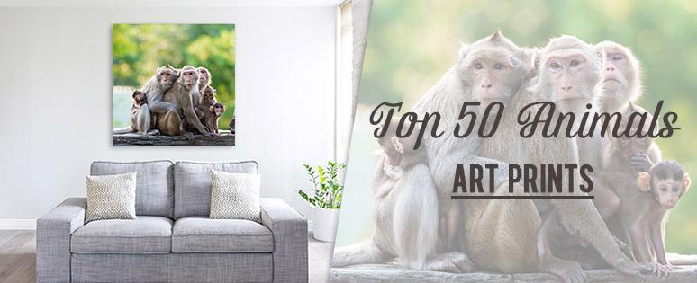 top-50-animals.jpg