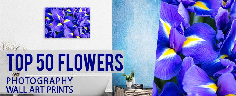 top-50-flower.jpg