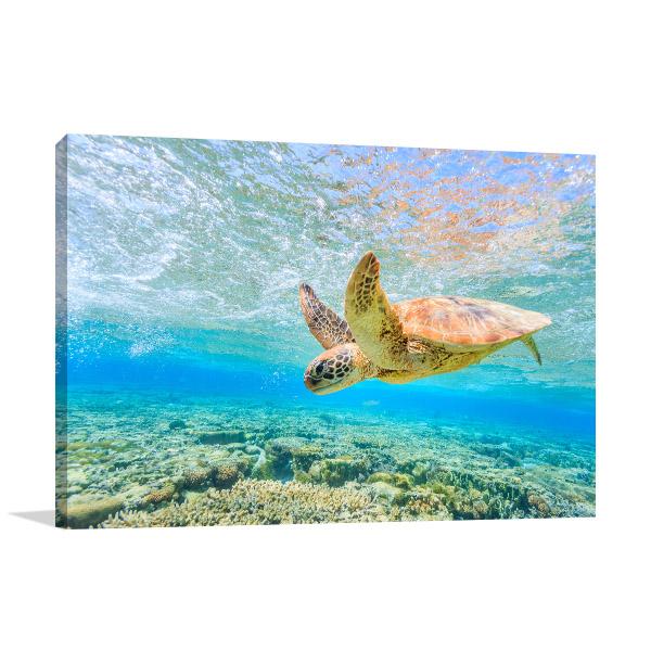 Turtle Diving Photo Art