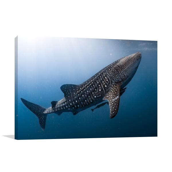 Whale Shark Print Artwork